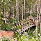 The Little Bridge at Lakeside, Pemberton, Western Australia by Elaine Teague