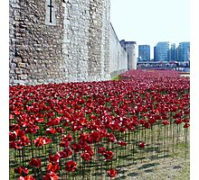 Sea of poppies -Tower of London Photographic Print