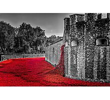 Cascading Poppies, Tower of London Photographic Print