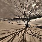 Burnt snowgums, Bogong High Plains by Kevin McGennan