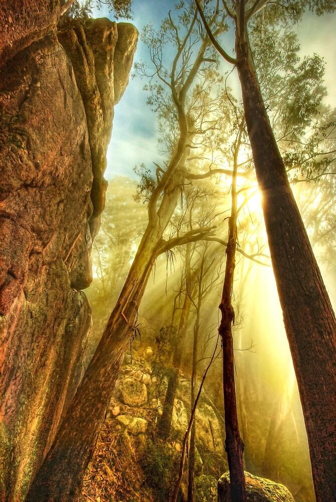 Clearing mist, Mount Buffalo by Kevin McGennan