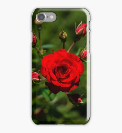 Fabulously Red Rose Burst Just in Time for Valentines iPhone Case/Skin