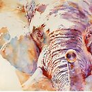 African Elephant _ The Governor by Stephie Butler