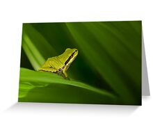 PACIFIC TREE FROG Greeting Card