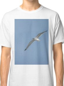 California gull 4 Classic T-Shirt