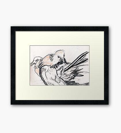 Dove Love 4 Framed Print