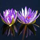 Water Lillies by jozi1