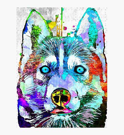Siberian Husky Grunge Photographic Print