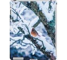 Female Cardinal In Snowy Tree iPad Case/Skin