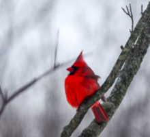 Cardinal In A Snow Storm Sticker