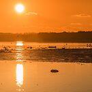 Saturday Morning along the estuary pano by Martina Fagan