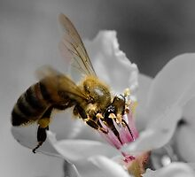 Busy Bee by Sandra Johnston