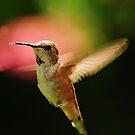 WILD BIRDS OF OREGON by RoseMarie747