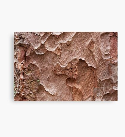 Macro photo of pine bark Canvas Print
