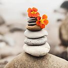 Beach Stones And Wildflowers by Elena Ray