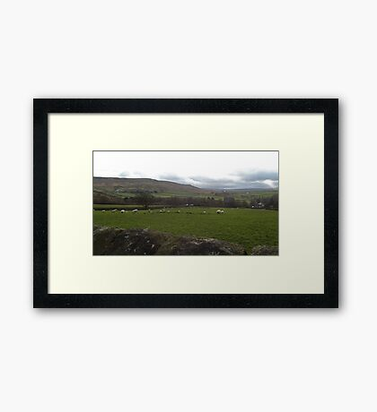 Field of sheep Framed Print