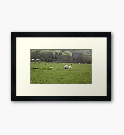 Hungry sheep Framed Print