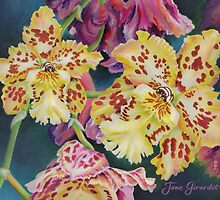 Tiger Orchid by Jane Girardot