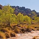 Bungle Bungles Ranges in the Kimberley, WA, Australia. by johnrf