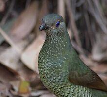 Female Bower Bird by Richard Lawley