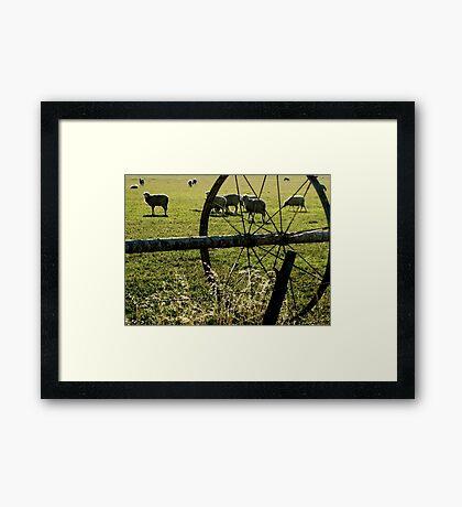 Sprinklers - Sheep Framed Print