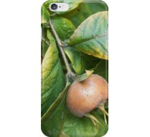 loquats on tree iPhone Case/Skin