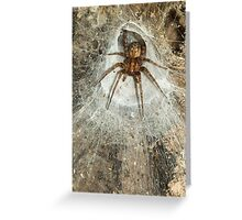 Tegeneria Spider in Web Greeting Card