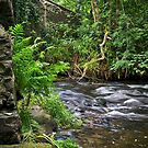 River Lynher by mlphoto
