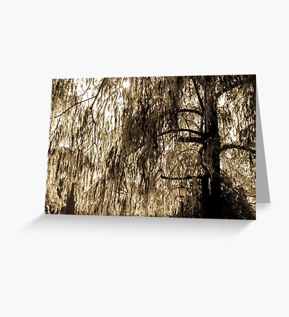 Weeping Willow in Sepia Tones Greeting Card