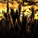 Fiery Sunset by mlphoto