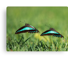 Dancing in unison Canvas Print