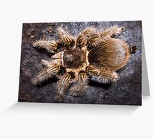Curly Hair Tarantula Greeting Card