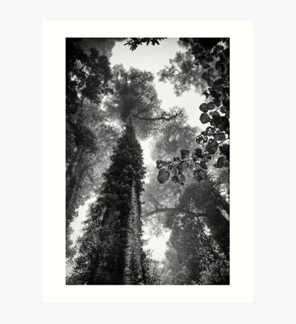 Look up - and up and up! Art Print
