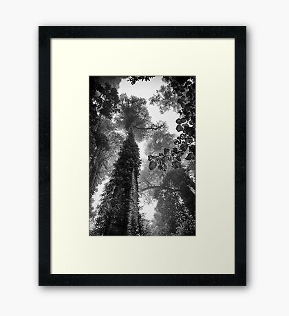 Look up - and up and up! Framed Print