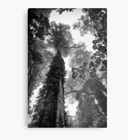 Look up - and up and up! Metal Print
