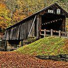 Autumn In Full Glory by Deborah  Benoit