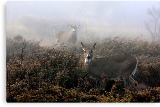 The rut is on! - White-tailed Buck and doe by Jim Cumming