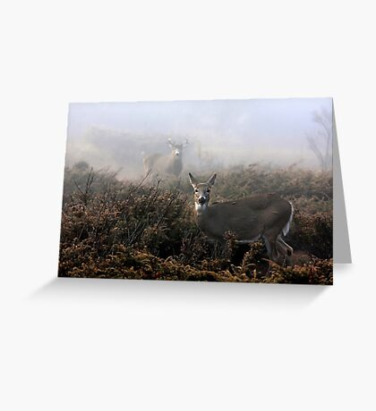 The rut is on! - White-tailed deer  Greeting Card