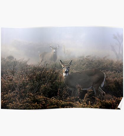 The rut is on! - White-tailed deer  Poster