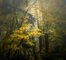 Colors in the Fog ~ Fall Colors ~ by Charles & Patricia   Harkins ~ Picture Oregon