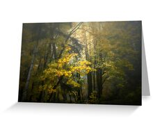 Colors in the Fog ~ Fall Colors ~ Greeting Card