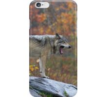 Timber Wolf in the rain iPhone Case/Skin