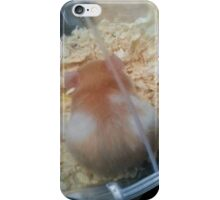 Colour Markings Of Lavender the Hamster iPhone Case/Skin