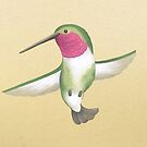 Broad-tailed Hummingbird by Katie Corrigan