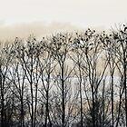 Birds by ak4e