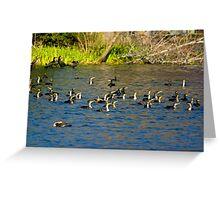 Cormorants Galore Greeting Card