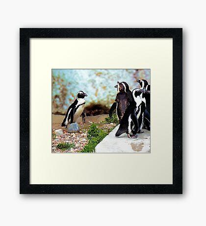 Penguin gathering Framed Print