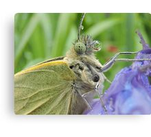 Large White Butterfly 13 Canvas Print