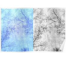 Bare trees branches 2 Poster