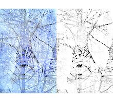 Bare trees branches 3 Photographic Print